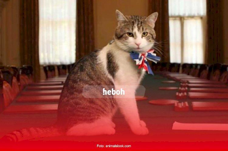 Kamu Pecinta Kucing? Wajib Banget nih Datang ke Salah Satu Tempat Wisata Ini, Dijamin Bahagia!
